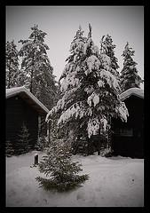 Mökki jouluksi vuokramökki jouluna source:http://www.flickr.com/photos/pappadopoulos/3140342563/